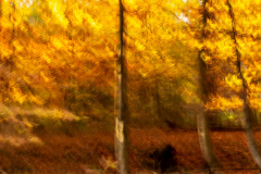 Herbstliches Zwickenbachtal