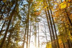 Herbststimmung im Zwickenbachtal