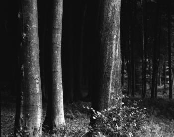 Meller-Bewaldung-0003