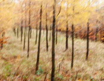 Meller-Bewaldung-0014-scaled