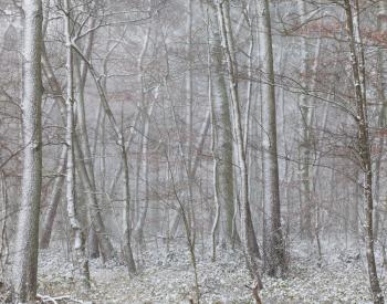 Meller-Bewaldung-0084