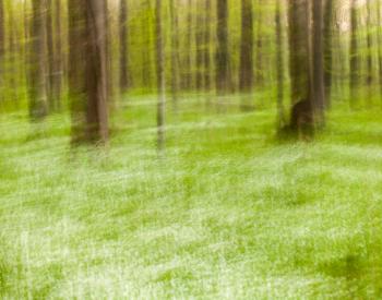 Meller-Bewaldung-1474