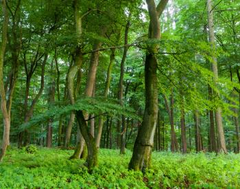 Meller-Bewaldung-1516