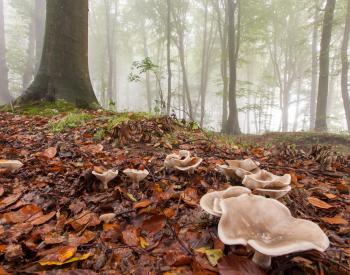 Meller-Bewaldung-1519