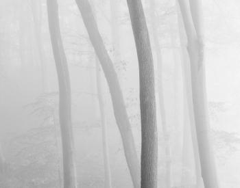 Meller-Bewaldung-3