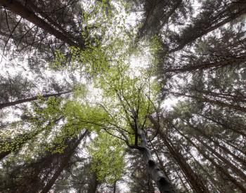 Meller-Bewaldung-4