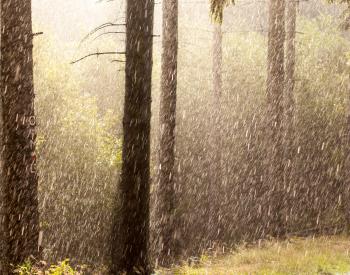 Meller-Bewaldung-4120