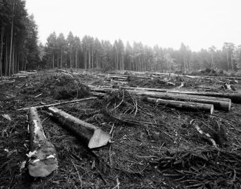 Meller-Bewaldung-5