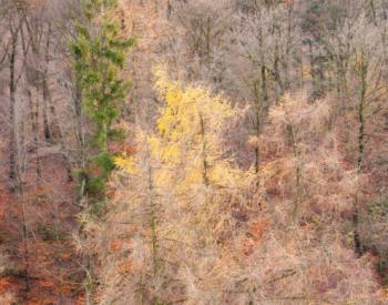 Meller-Bewaldung-6-scaled