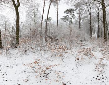 Meller-Bewaldung-7-scaled