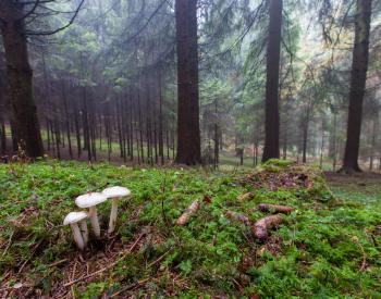 Meller-Bewaldung-7352