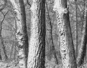 Meller-Bewaldung-8