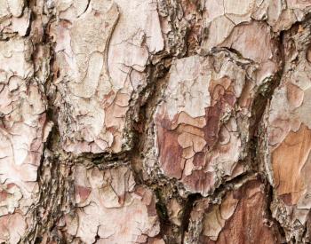 Meller-Bewaldung-8557