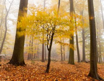 Meller-Bewaldung-8822