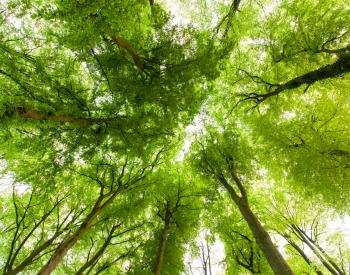 Meller-Bewaldung-8874