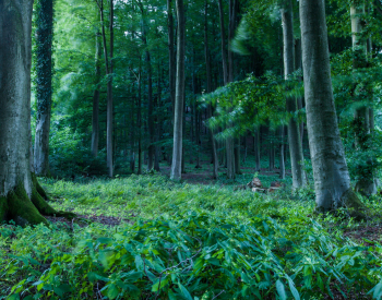 Meller-Bewaldung-9331