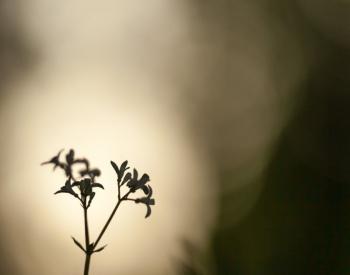 Meller-Bewaldung-9459