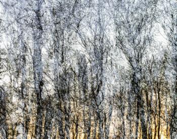 Recall-Natur-0169