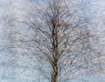 Recall-Natur-2126