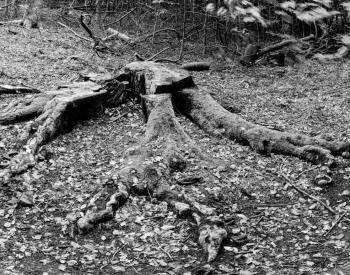 Recall-Natur-5-scaled