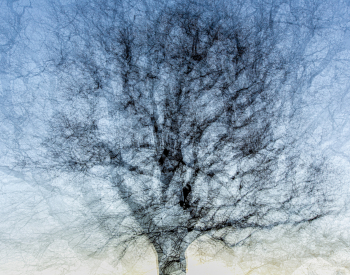 Recall-Natur-6235